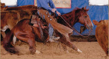 Photo of Cutting Horses